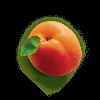 saint-mamet-abricot-entier