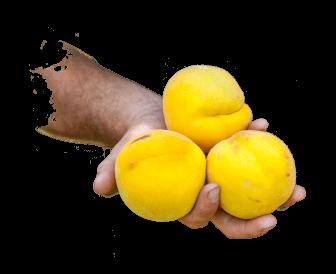 saint-mamet-mains-pommes-2