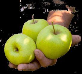 saint-mamet-mains-pommes