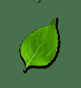 saint-mamet-feuilles-3