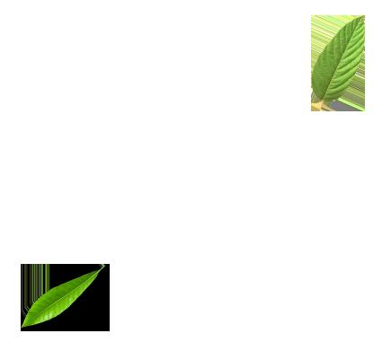saint-mamet-feuilles-2