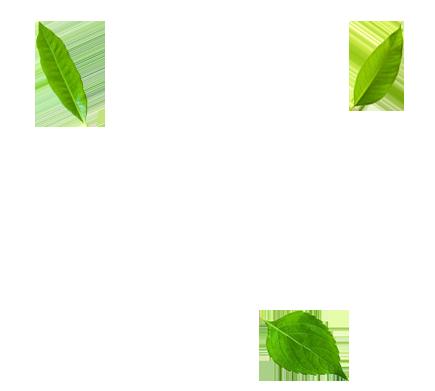 saint-mamet-feuilles